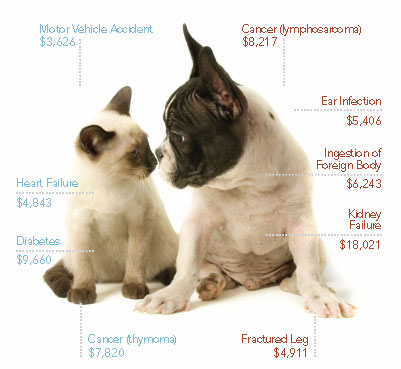 Why-pet-insurance